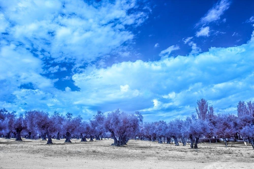 foto-infrarroja-madrid