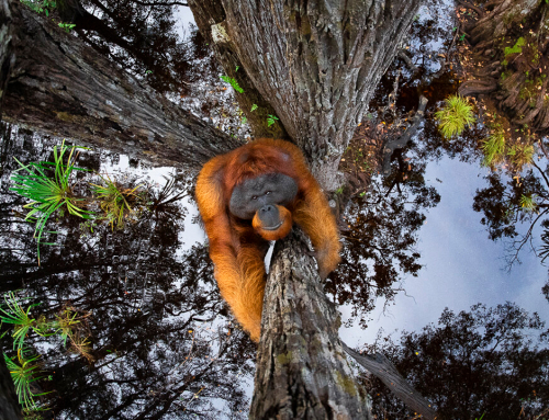World Nature Photography Awards 2020